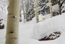 Aspen Snowmass Developments 201718