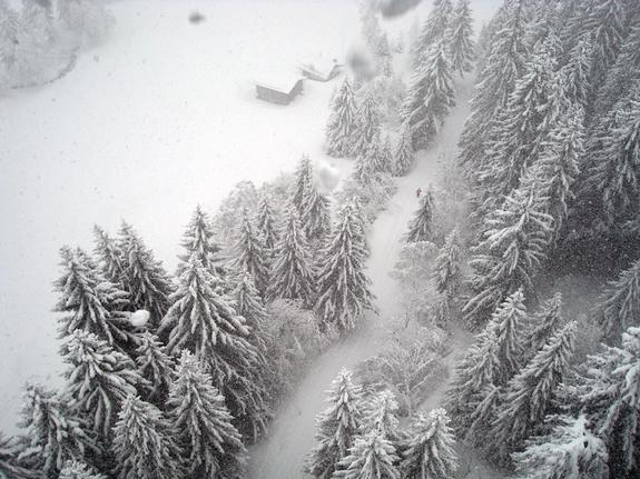 Laax overhead powder trees