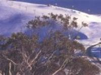 Ski Resort Mount Hotham in Australia