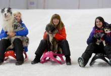 CHILL FACTORE 'BRING YOUR DOG TO WORK DAY'